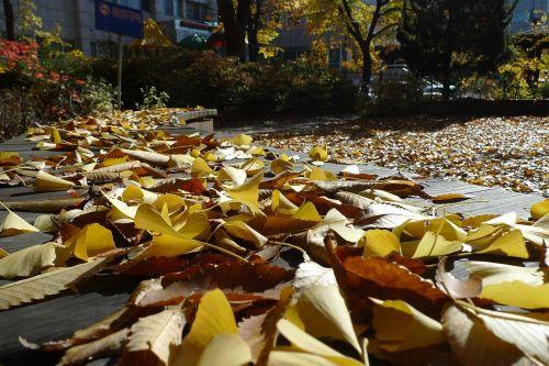 autumn autumn leaves blue sky