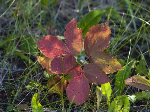 autumn golden autumn leaves