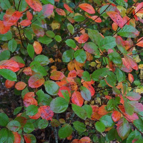 autumn riot of color natural art