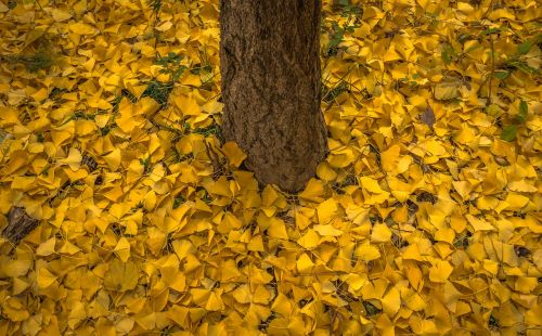 autumn leaves bank