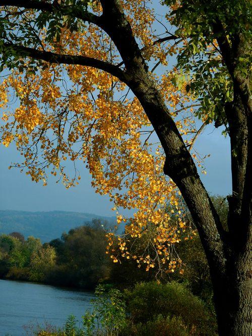 autumn autumn tree autumn trees