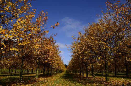 autumn november colorful