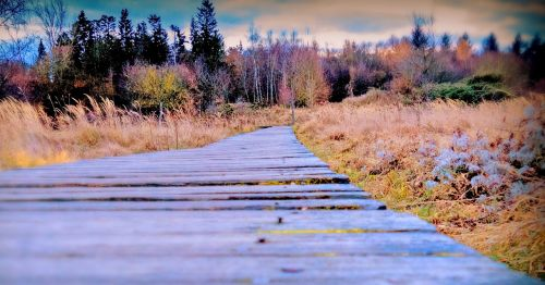 autumn away wooden track