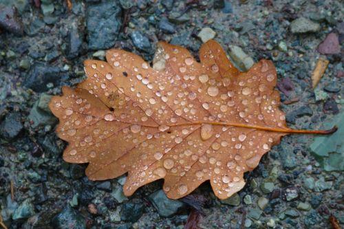 autumn fall brown