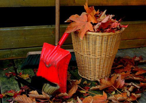 autumn leaves golden autumn