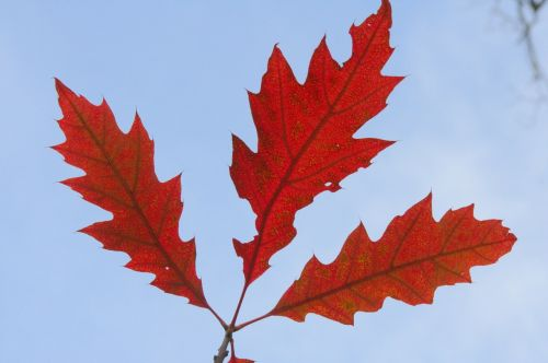 autumn fall foliage golden autumn