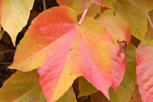 autumn fall foliage red