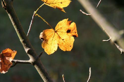 autumn leaves fall foliage