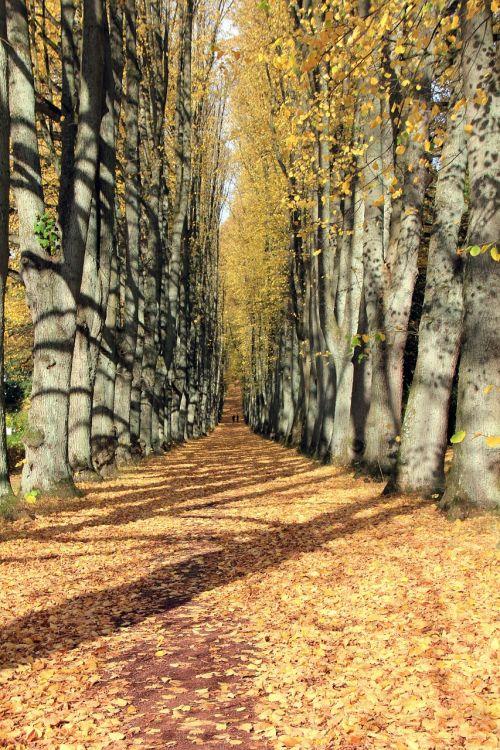 autumn away avenue