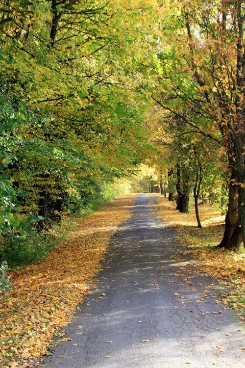 autumn leaves away