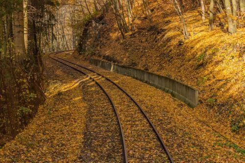 autumn yellow rails