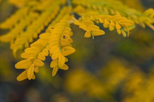 autumn leaves emotion