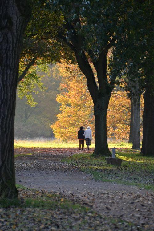 autumn autumn forest golden autumn