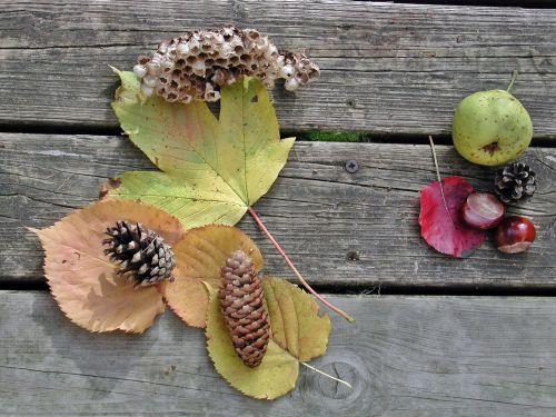 ruduo,vaisiai,fondas,gamta,rudens apdaila,kaštonas,apdaila,kaštainių vaisiai,vaisiai,lapai,lapai,klevo lapas,bakstelėkite,pušies kankorėžiai,avilys,fundstücke,rudenį vaikščioti,spalvinga,kriaušė,kritimo lapija,kritimo lapai,surinkti,kalkių lapai