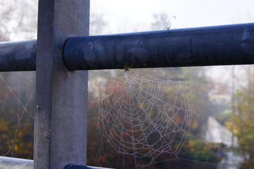 autumn dew cobweb
