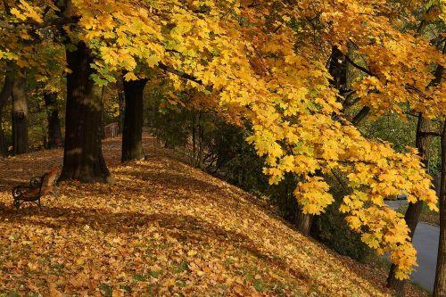 autumn autumn gold foliage