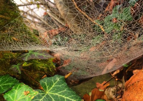 autumn animals cobweb