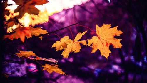autumn sheets pink
