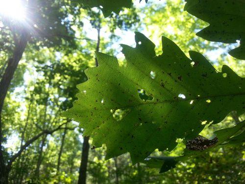 autumn foliage defoliation