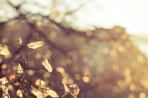 autumn foliage seasons