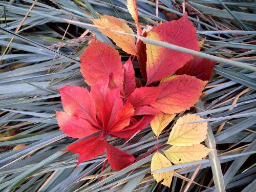 autumn leaves listopad