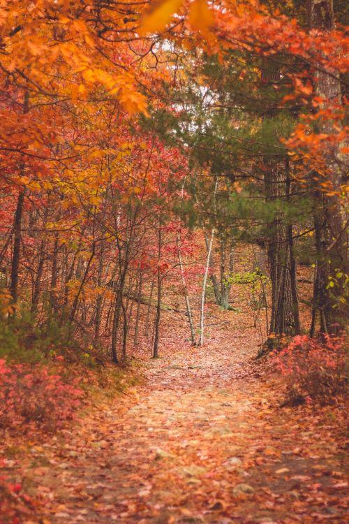 autumn fall trees