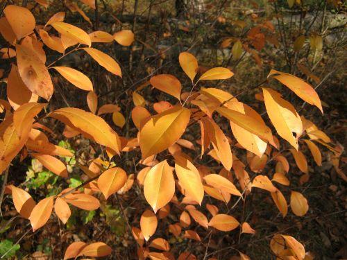 autumn leaves shiny