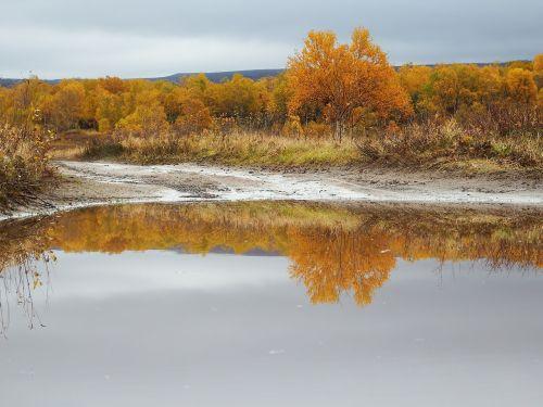 autumn puddles reflection