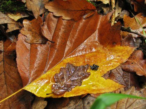 autumn yellow sheet autumn leaf