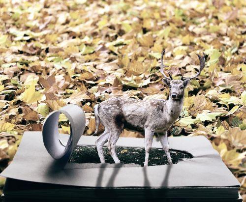 autumn roe deer forest