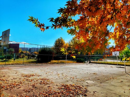 autumn,leaves,dry leaves,landscape,nature,green,plant,tree,background,beautiful,table fall,withered leaves,color,spring festival,sky,yellow,peace,basketball court,turkey,orange,the leaves are,inonu university,colorful