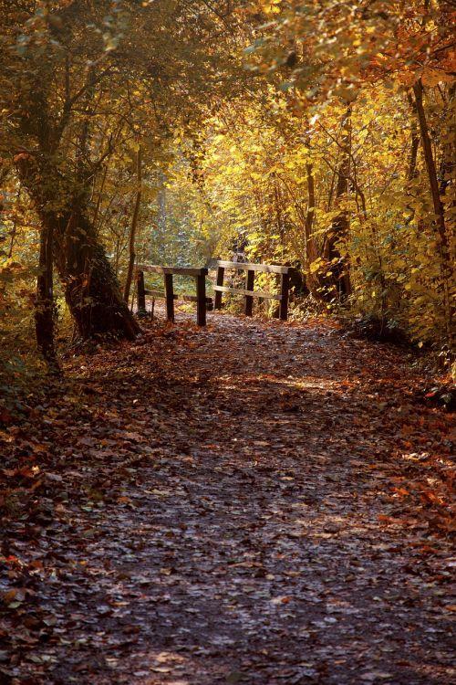 autumn heilbronn baden württemberg