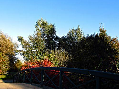 autumn foliage red