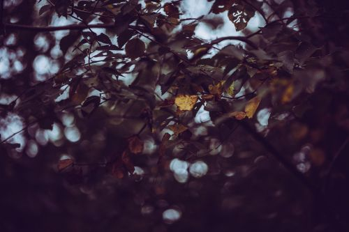 autumn leaves seasonal