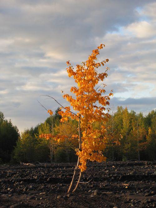 autumn forest golden autumn