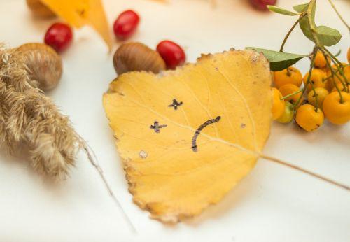 autumn september leaf