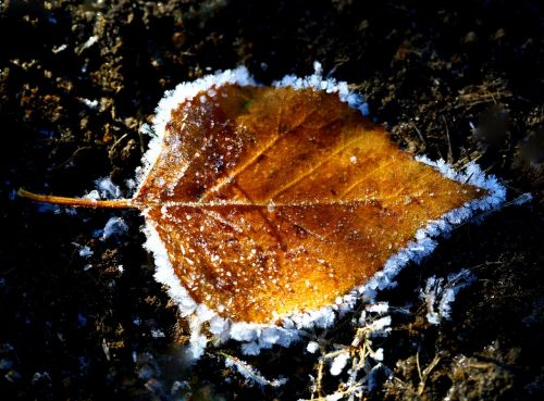 autumn the first frost leann