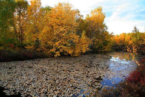 autumn fallen leaves lake