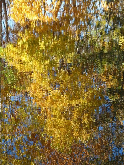 autumn reflection cat's-paw