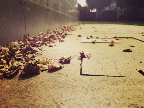 autumn foliage past
