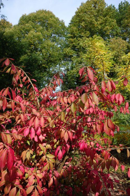 autumn leaves bush