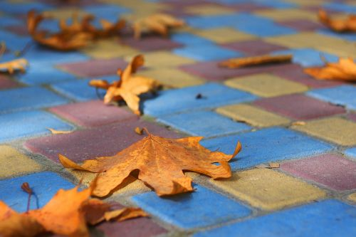autumn paint stroll