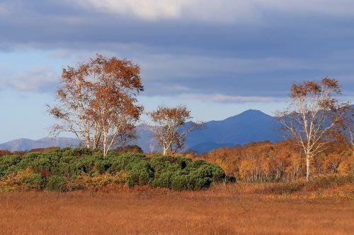 autumn mountains birch