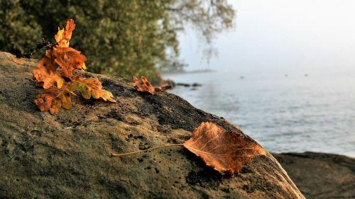 autumn morning autumn leaf