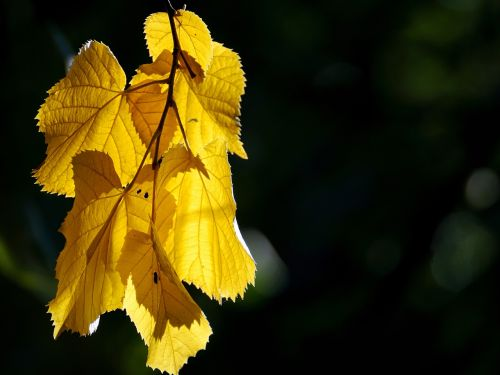 autumn golden golden autumn