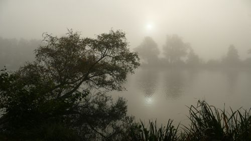 autumn early morning with fog mood