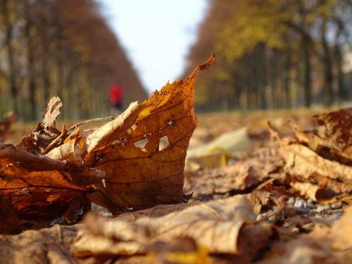 autumn musim gugur leaves