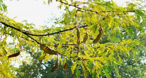ruduo,lapai,spalvoti lapai,kritimo lapija,lapai,gamta,aukso ruduo,raudoni lapai,spalvos pasikeitimas,trumpalaikis laikotarpis,medis,raudona
