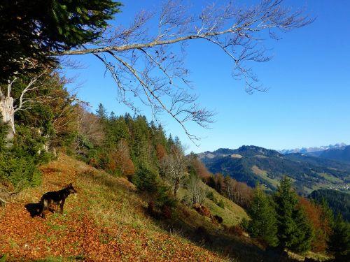 autumn allgäu mountains
