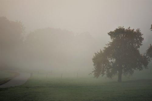 autumn landscape fog